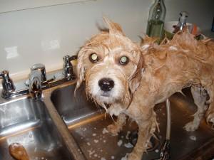 lilly-bath