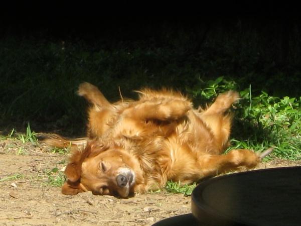 sunbathing-baylee